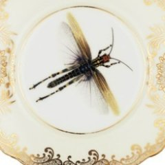 melody-rose-upcycling-ideas-dragonfly